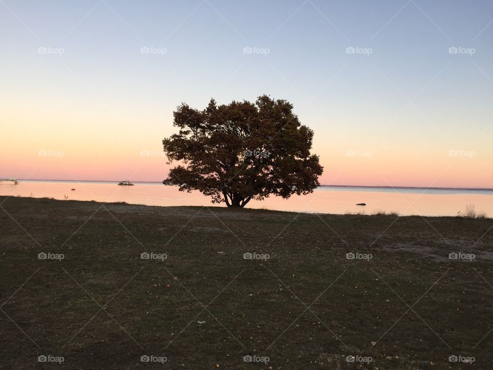 Oaktree by the sea