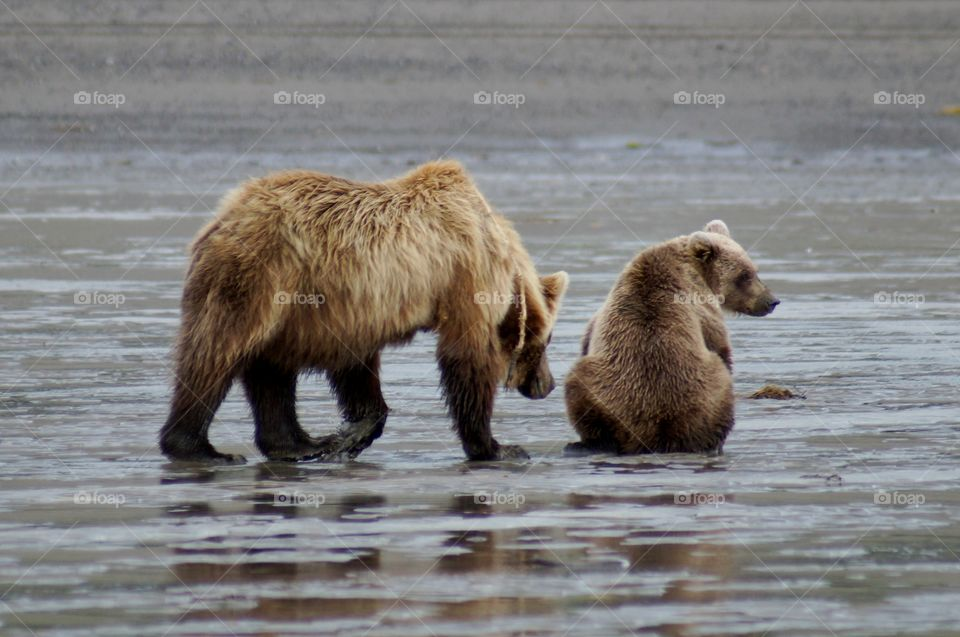 Mother and cub take a break from clamming