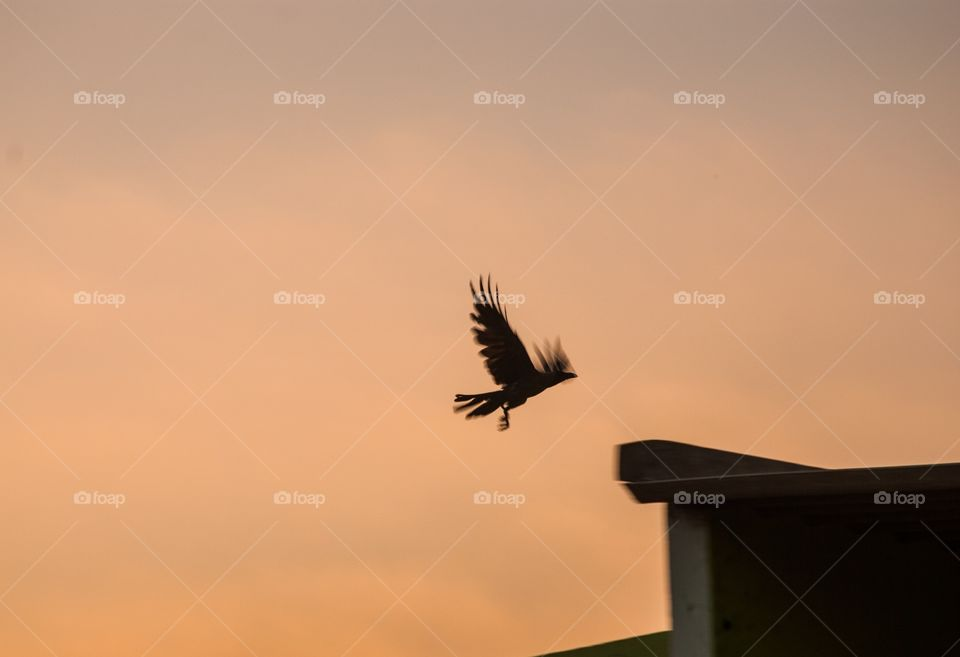sunset times bird