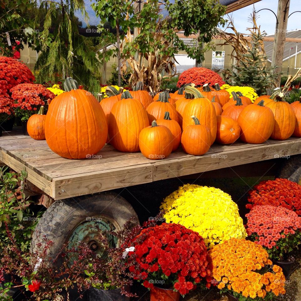 Pumpkin and mums on display in fall