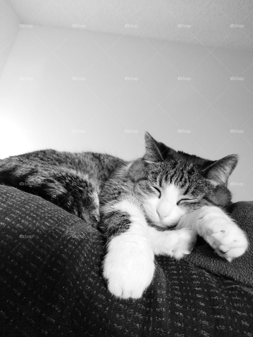 Black and white photo of a sleeping kitty in the city.