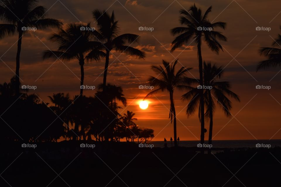 interesting Sunset among beautiful palm trees in Hawaii September 2016