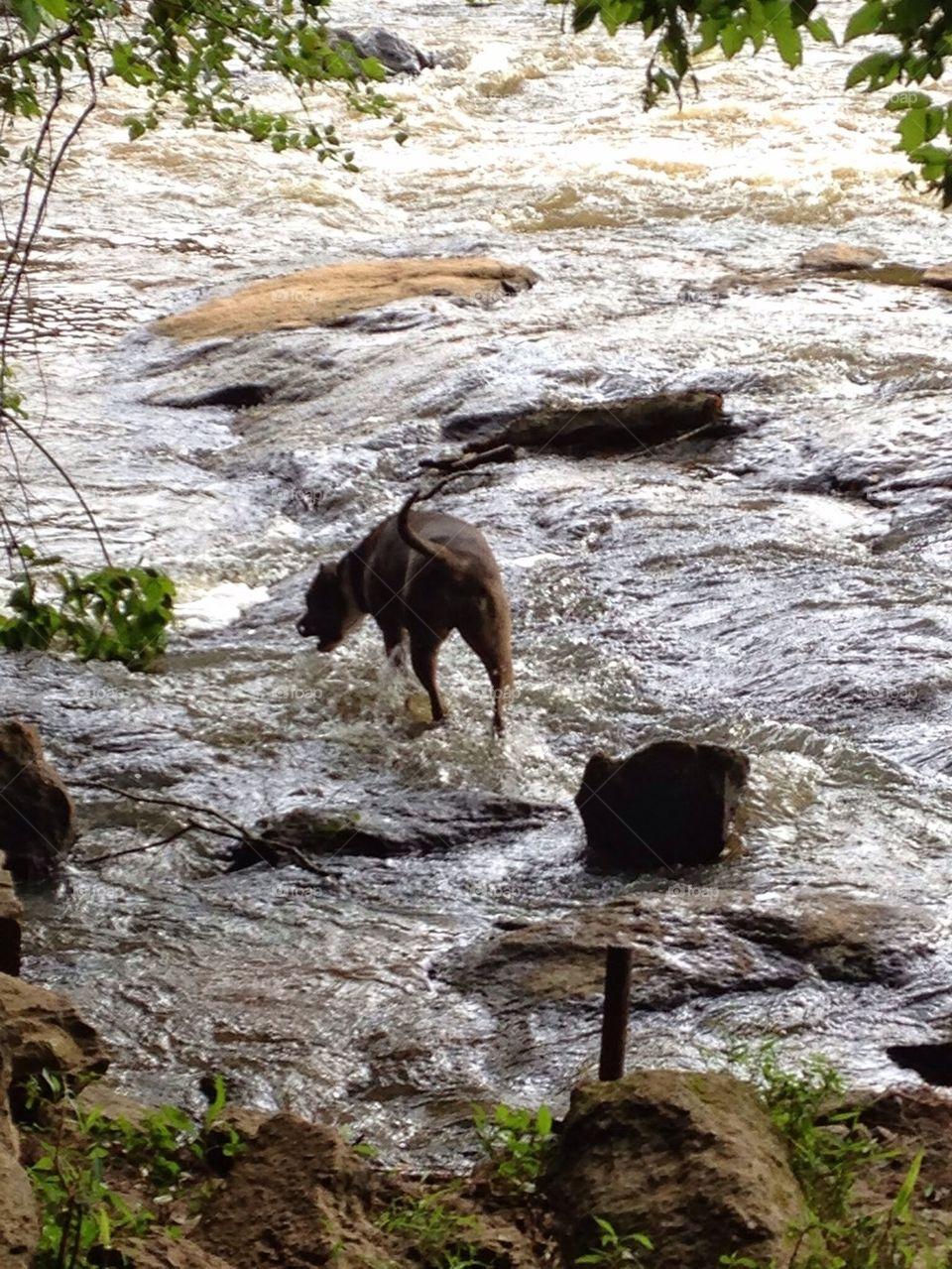 Dog at River near Athens Georgia