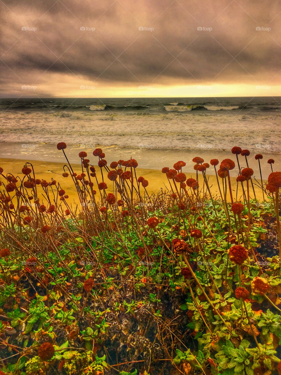 Flowers at beach during sunset