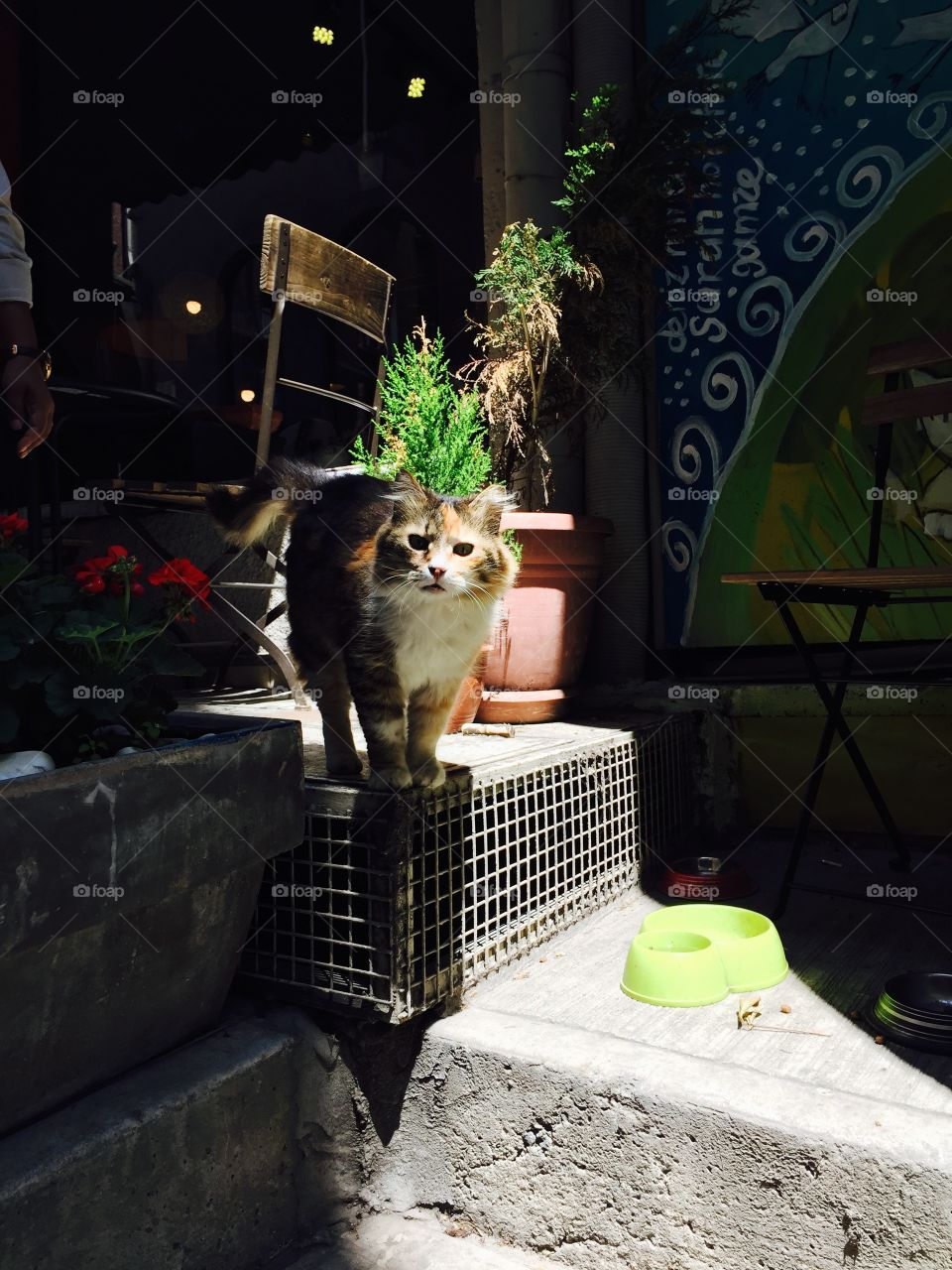 Cat at a cafe in Istanbul. Cat of Istanbul