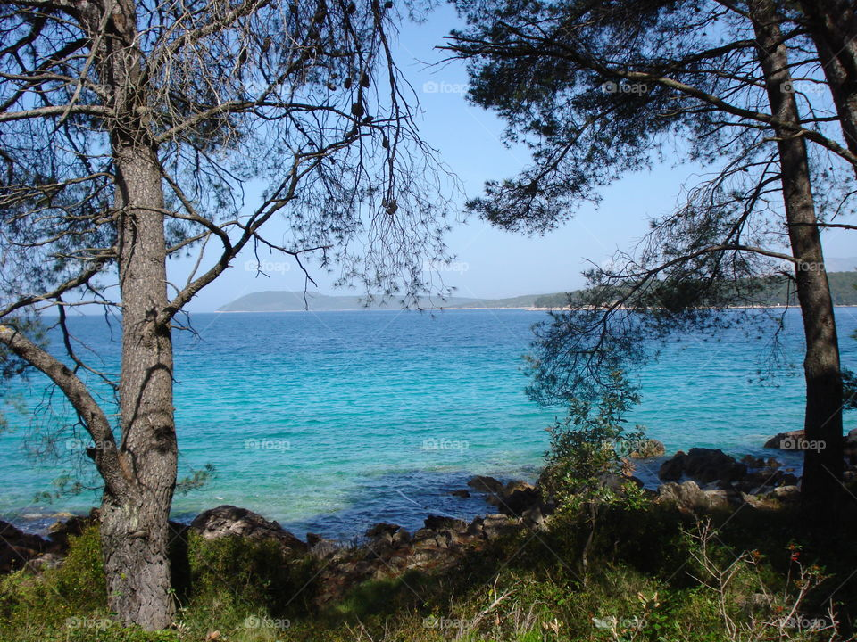 Pine Trees and the Sea