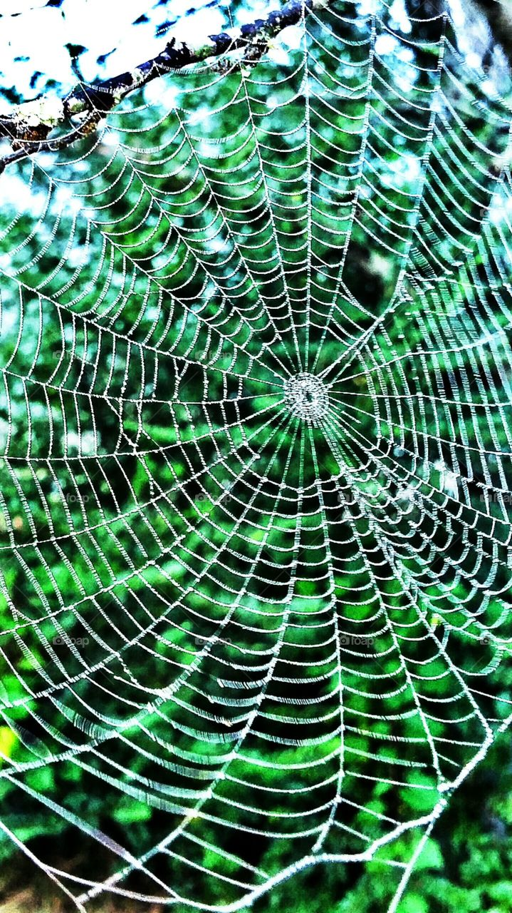 spider web with green background
