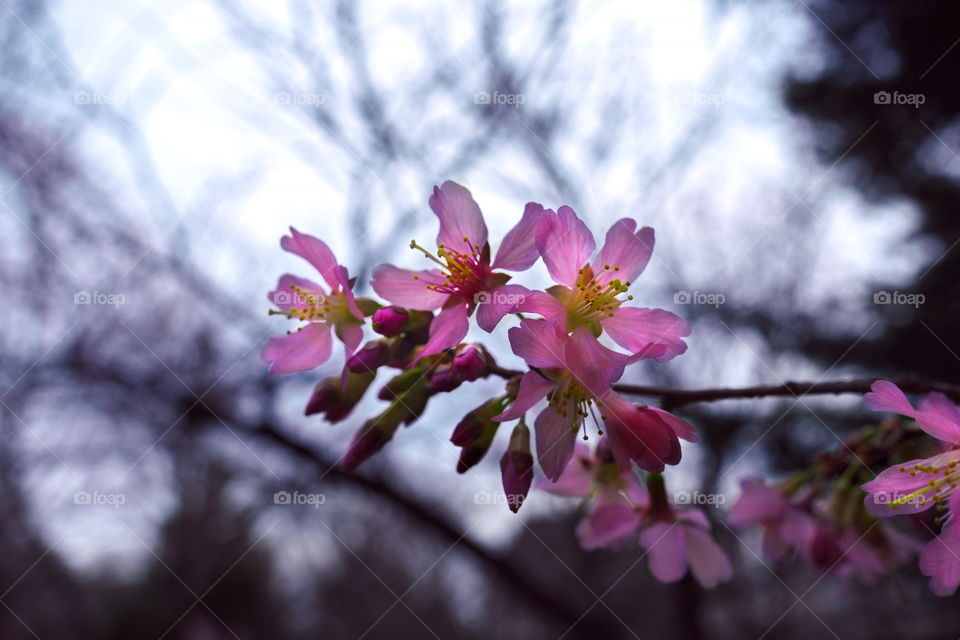 Blossoming Spring 2016.