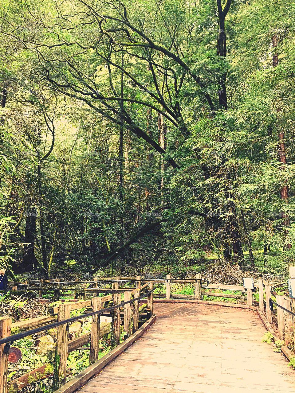 Muir Woods National Park San Francisco California