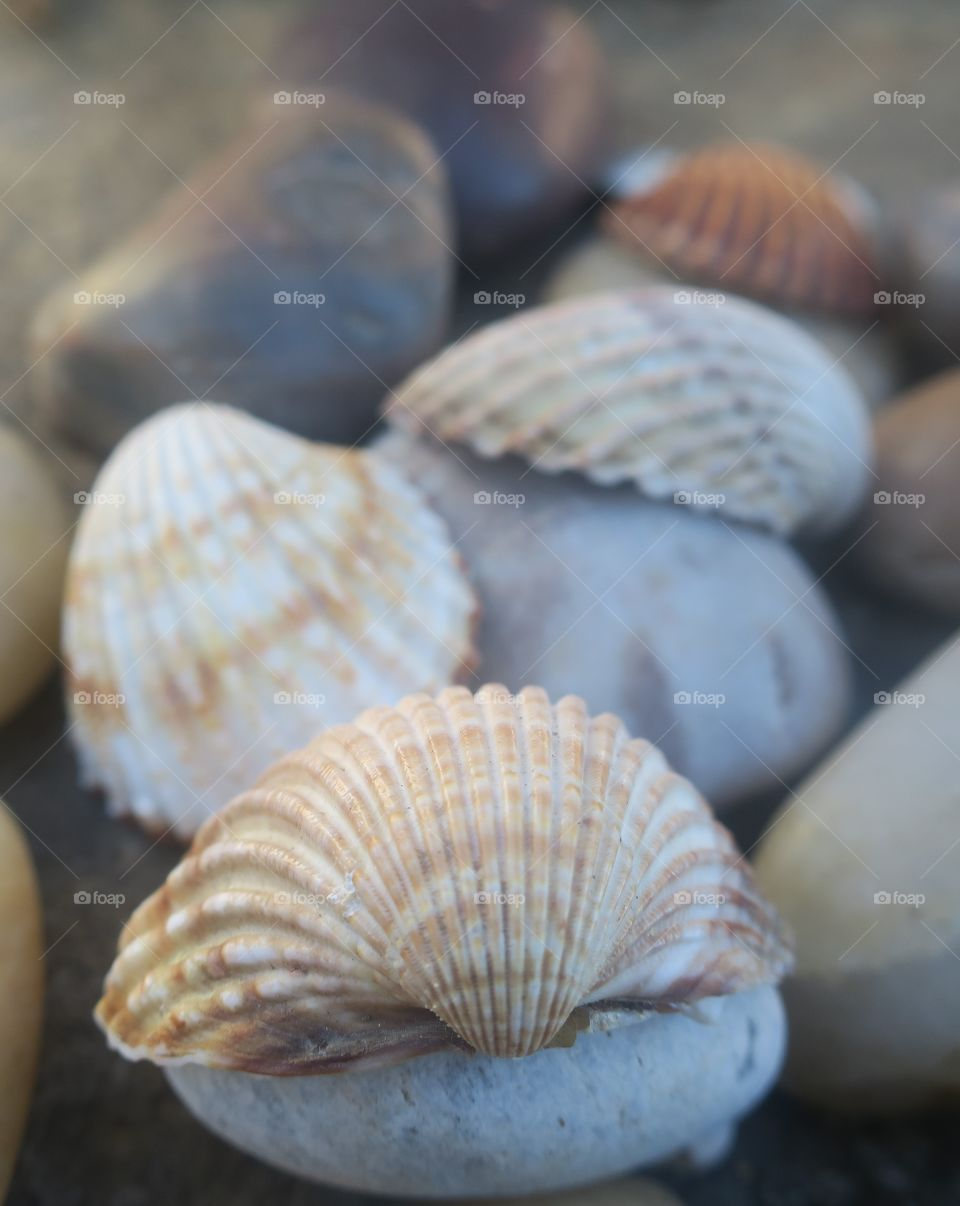 Close-up of animal shells