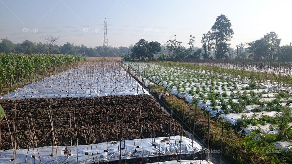 plants in the field