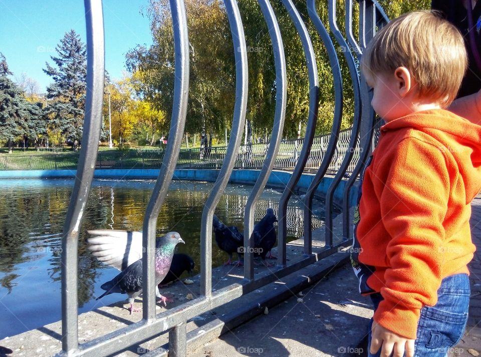 baby feeds pigeons малыш кормит голубей