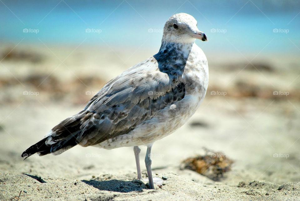 Seagull bird on the beach
