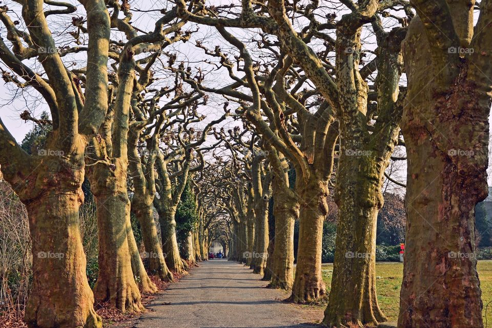 Empty road against bare trees