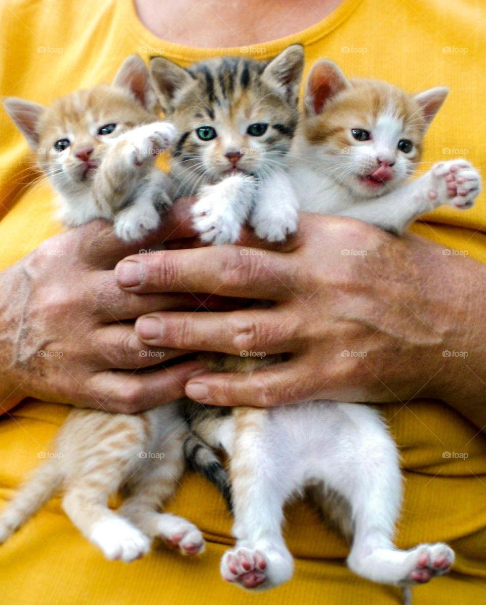 Three little kittens in human hands