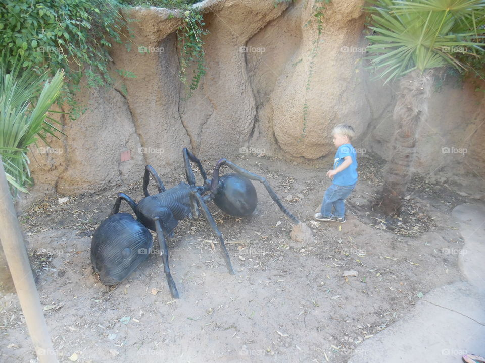 View of fake ant and boy