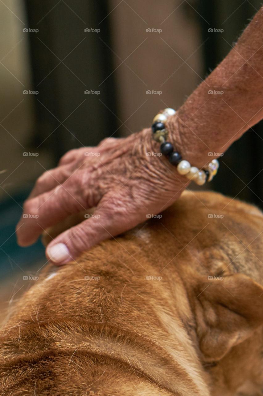Elderly hand stroking a dog