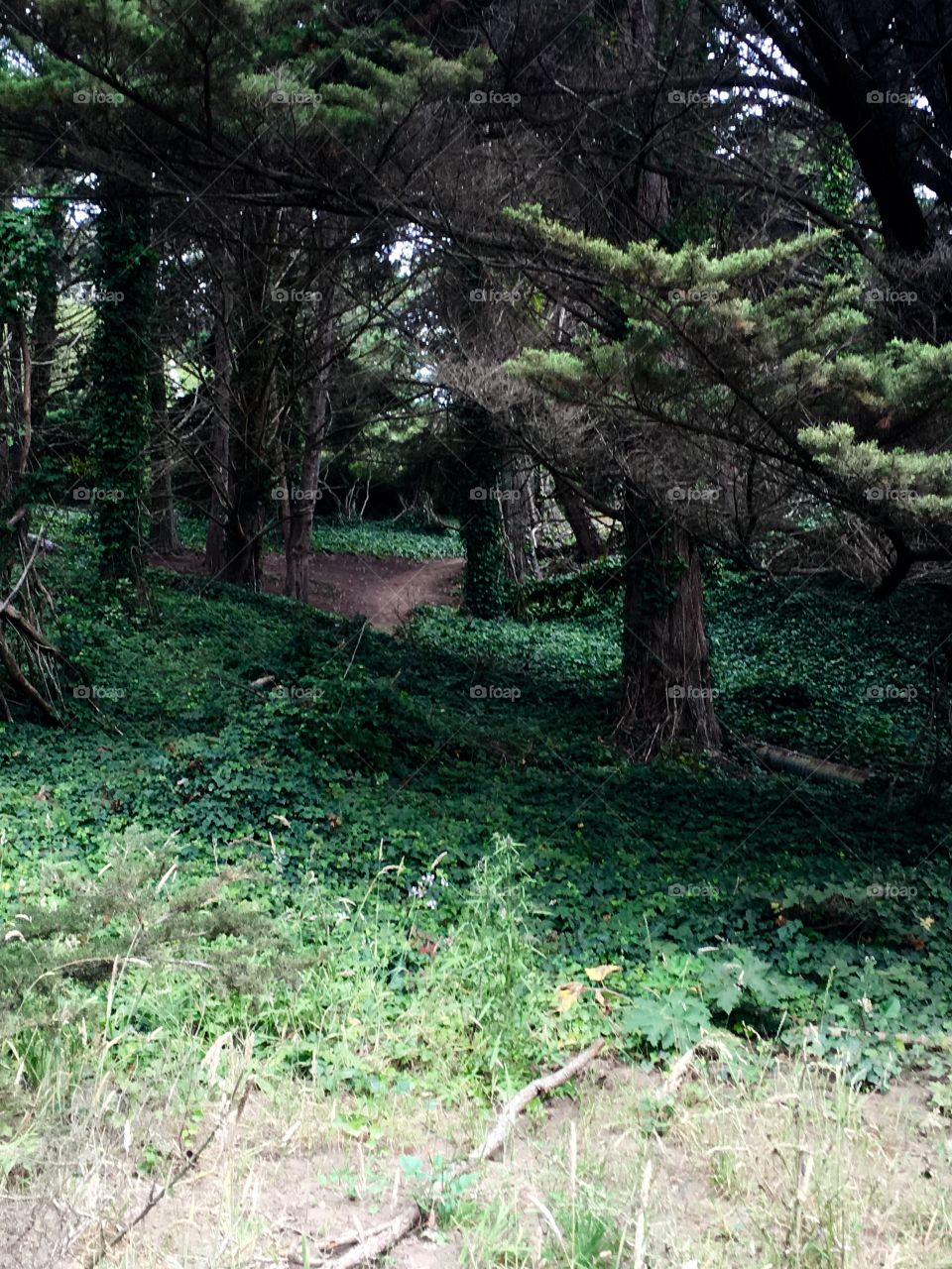 West coast forest