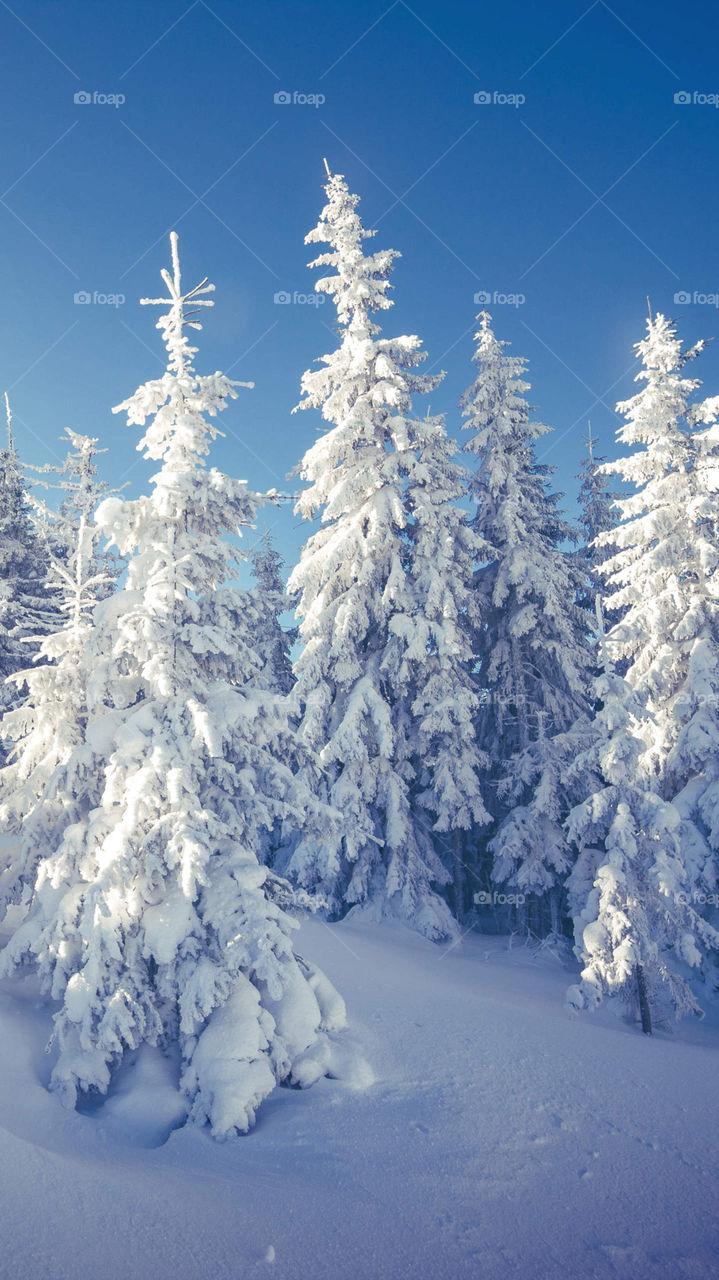 #snow#christmastree#goodtime