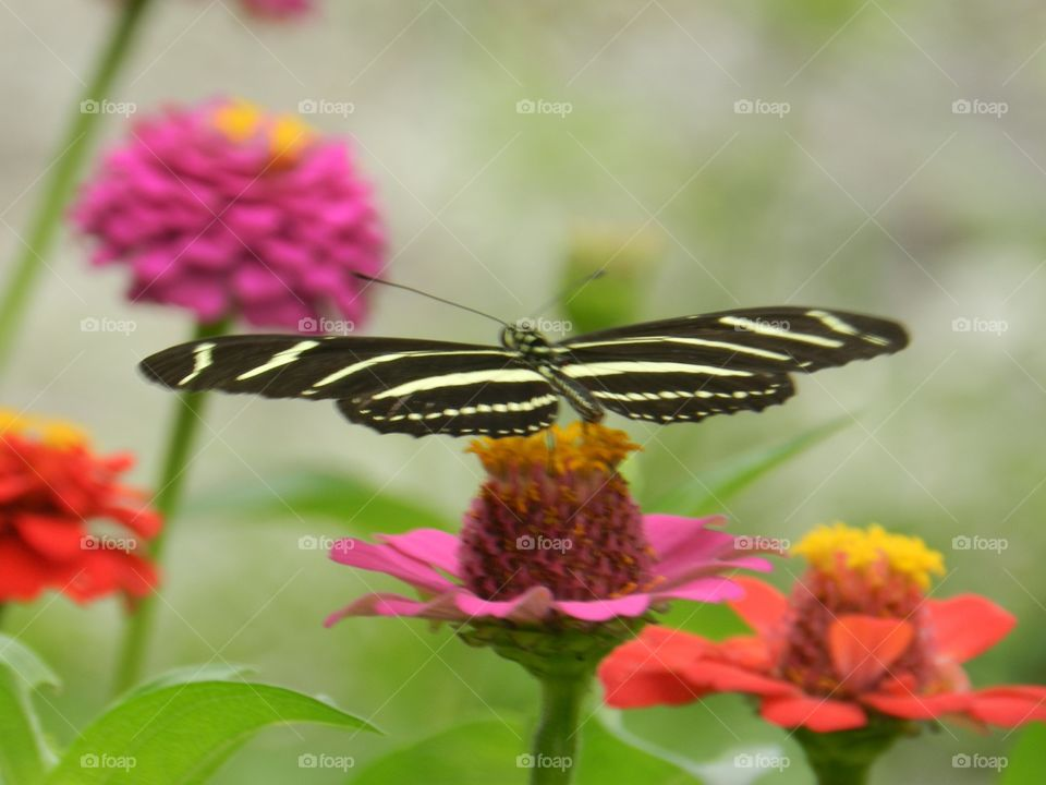 Nature, Butterfly, Flower, Insect, Summer