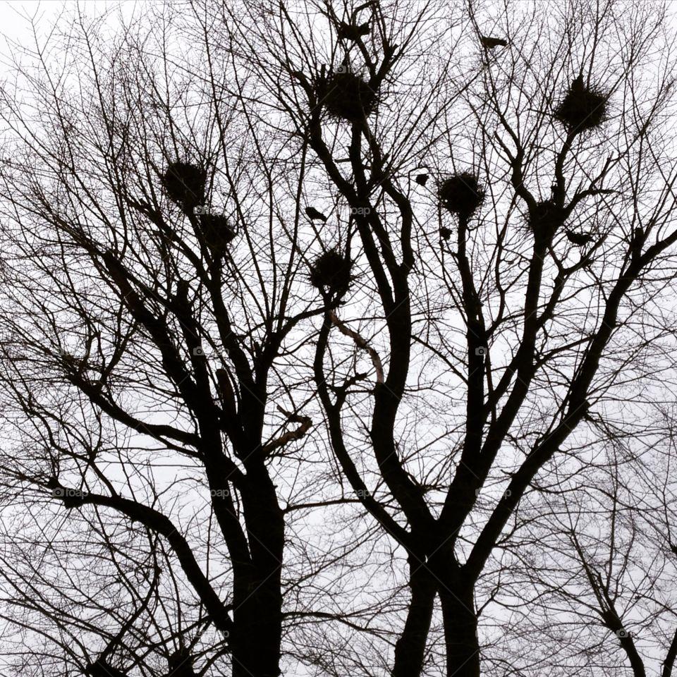 Tree, Winter, Landscape, Branch, Wood