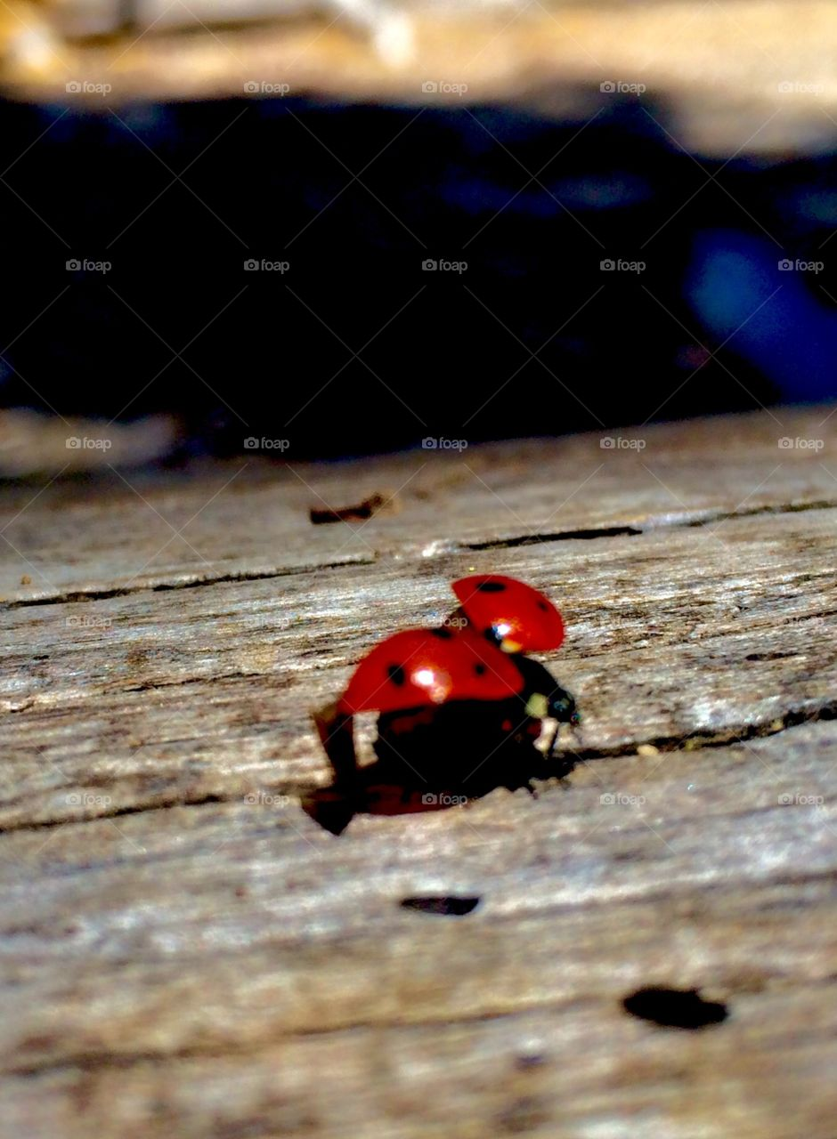 Lady bug about to fly
