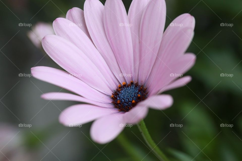 Close-up of a beautiful pink flower