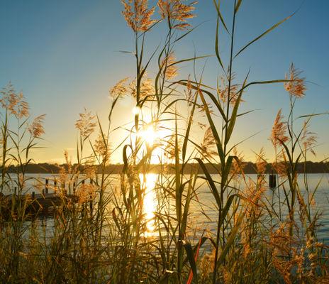 Sunlight reflecting on lake
