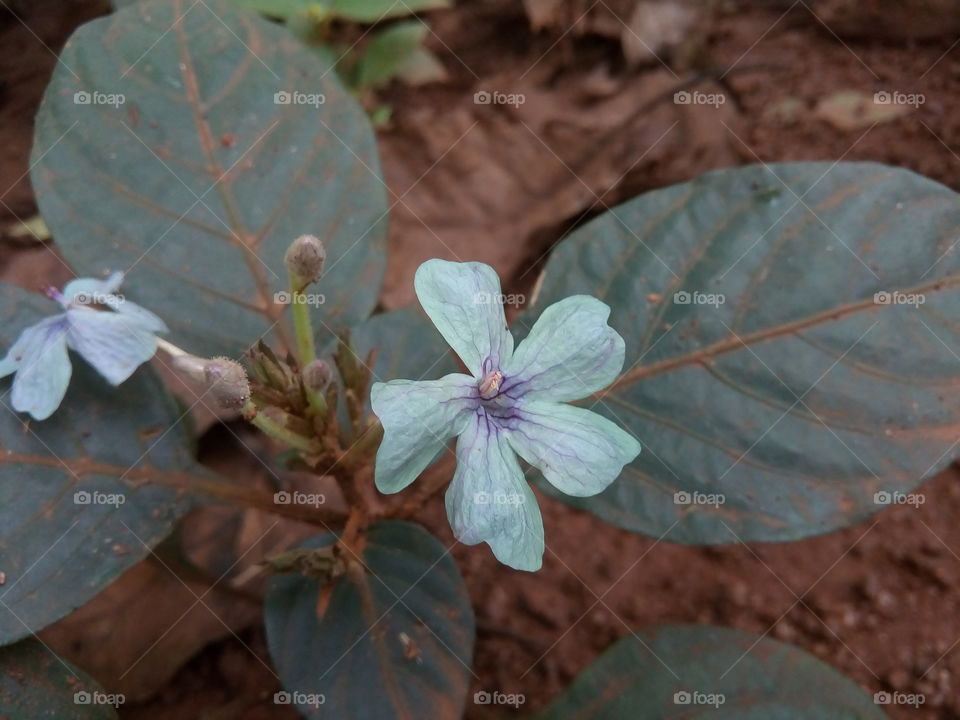 flower 2017-10-27  002  #আমার_চোখে #আমার_গ্রাম #nature