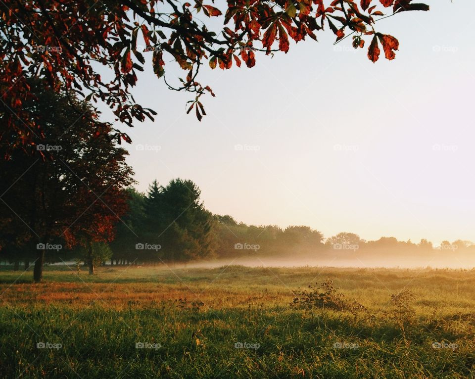 Autumn morning in the park