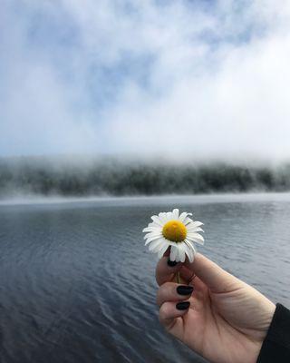 A daisy in the fog