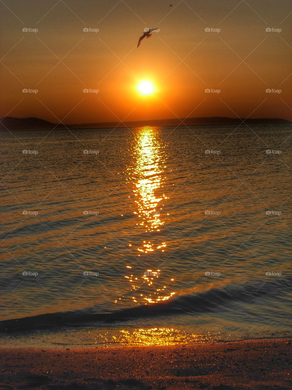 Reflection of sunlight and bird flying over sea