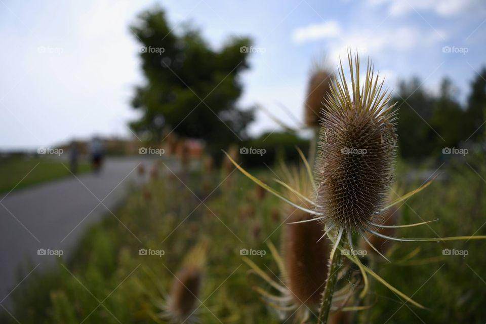 Nature, No Person, Outdoors, Summer, Landscape