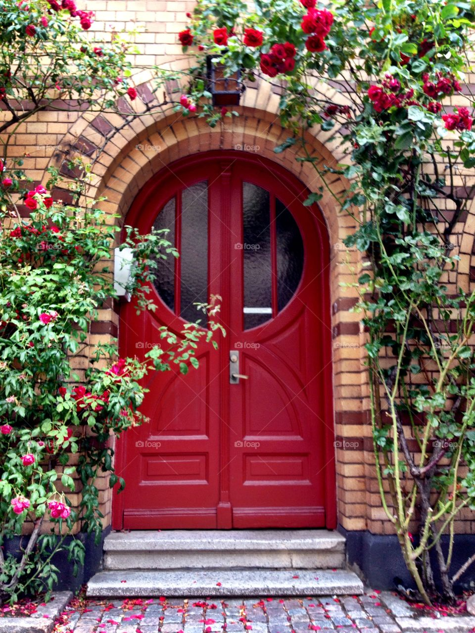 Red door with red roses