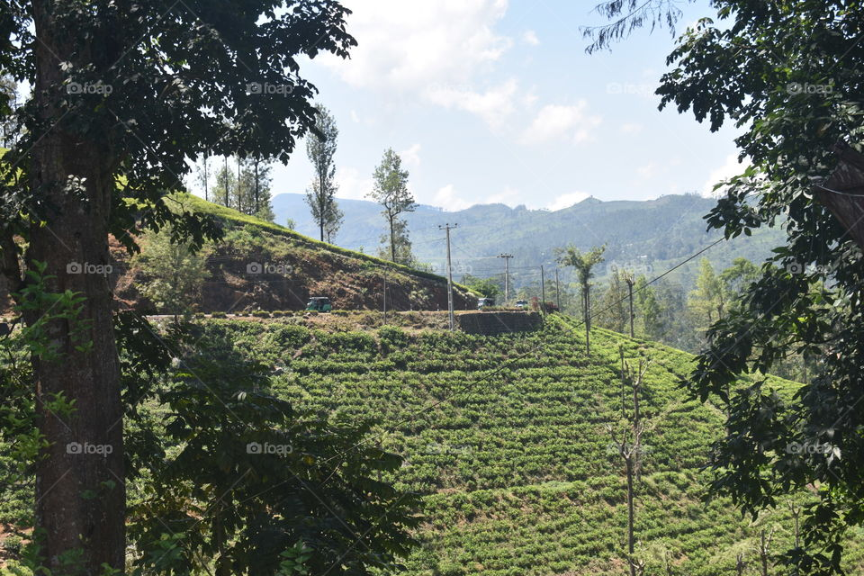 Beautiful tea astate surrounded by mountains