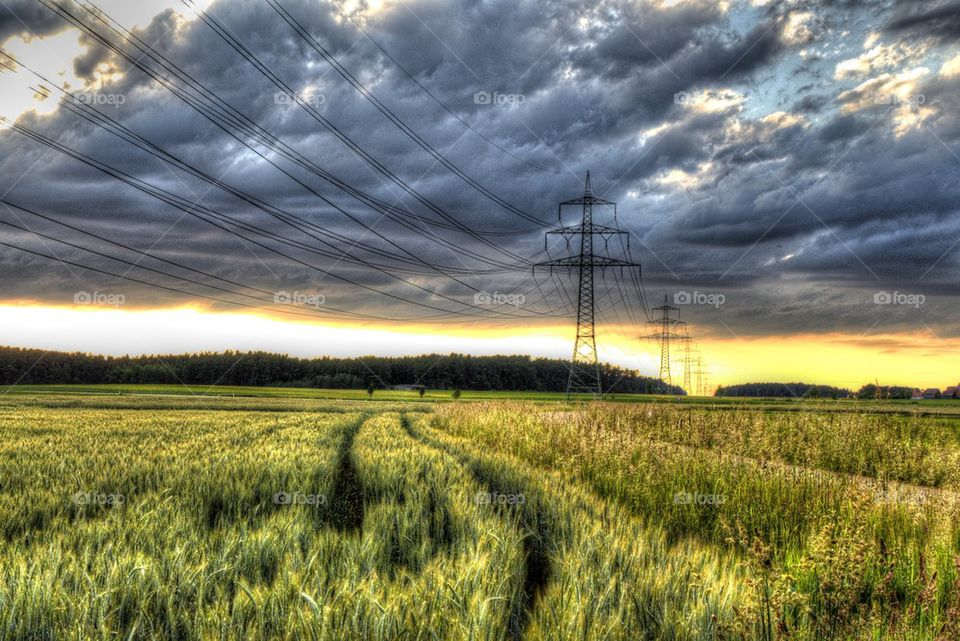 Sunset over the field   grass, green, farm, agriculture
