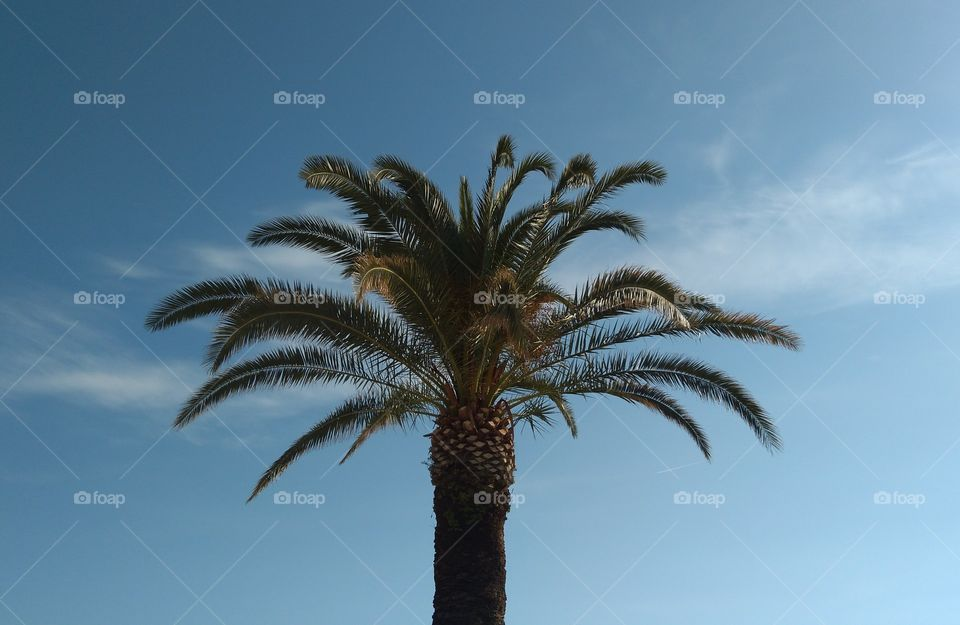 The Top of the Palm Tree
