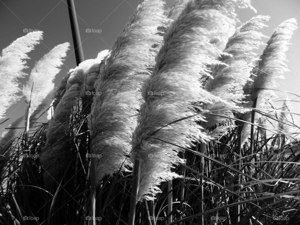 old fashioned feather duster. This is a picture I took labor day weekend. 👣 🚶 🏃 🔥 💨