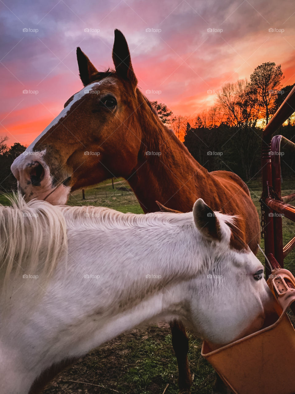 Colorful skies while feeding the horses in rural Texas