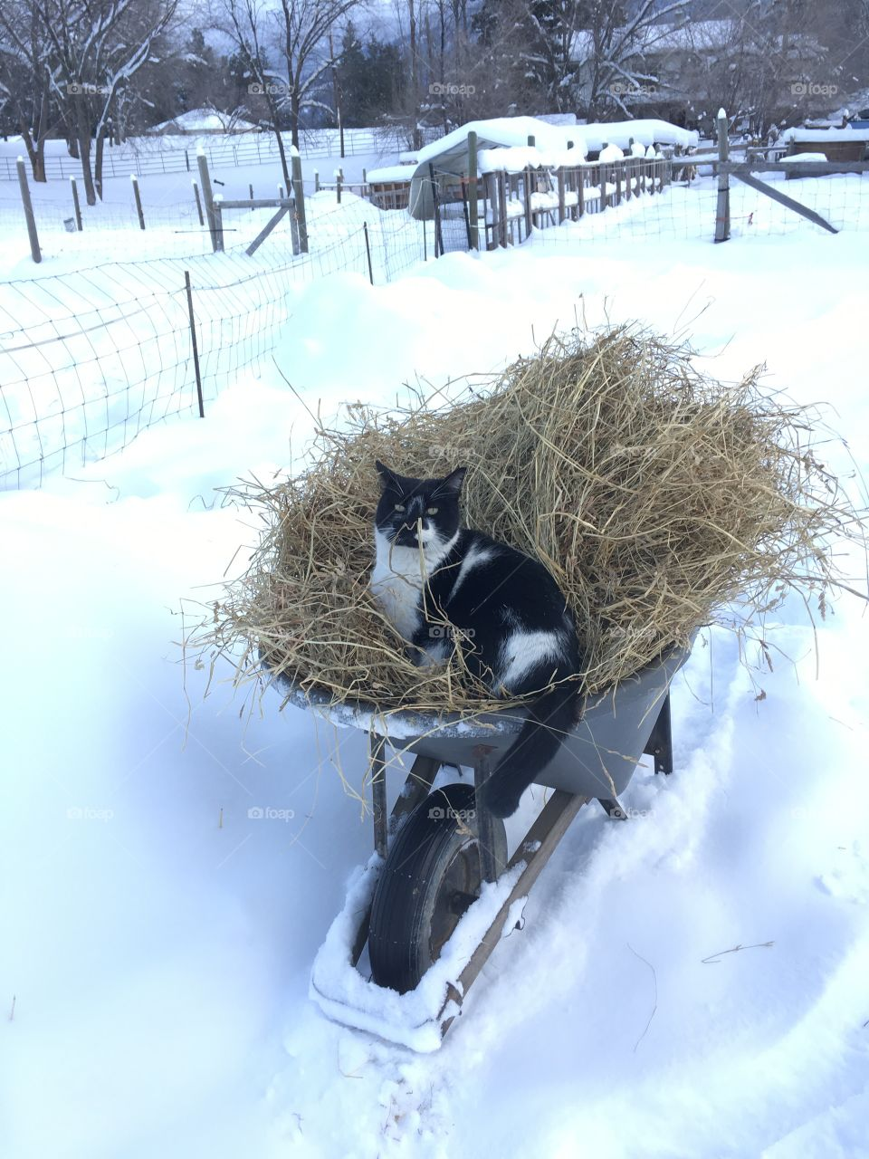 Cat for a ride