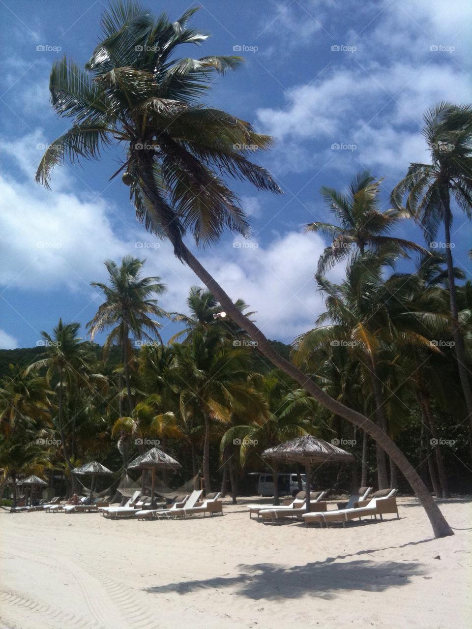 beach sky palm vacation by katyclemmans