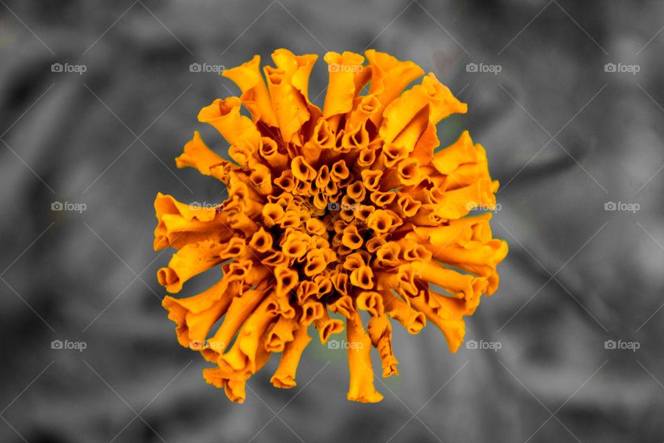 Orange nested flower petals