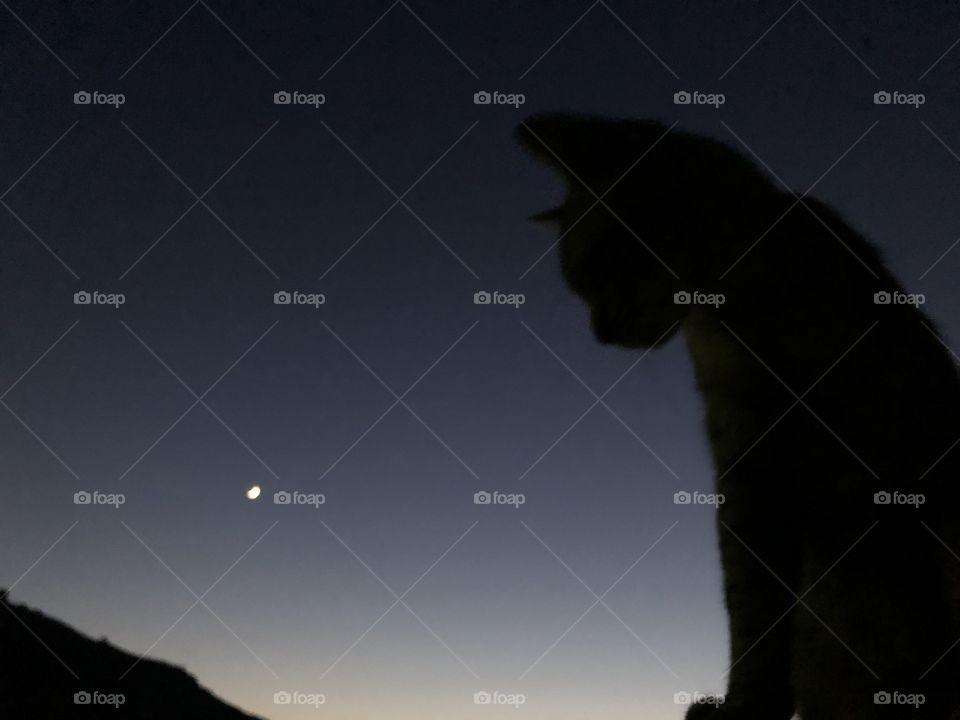 Silueta de un gato con la luna de fondo