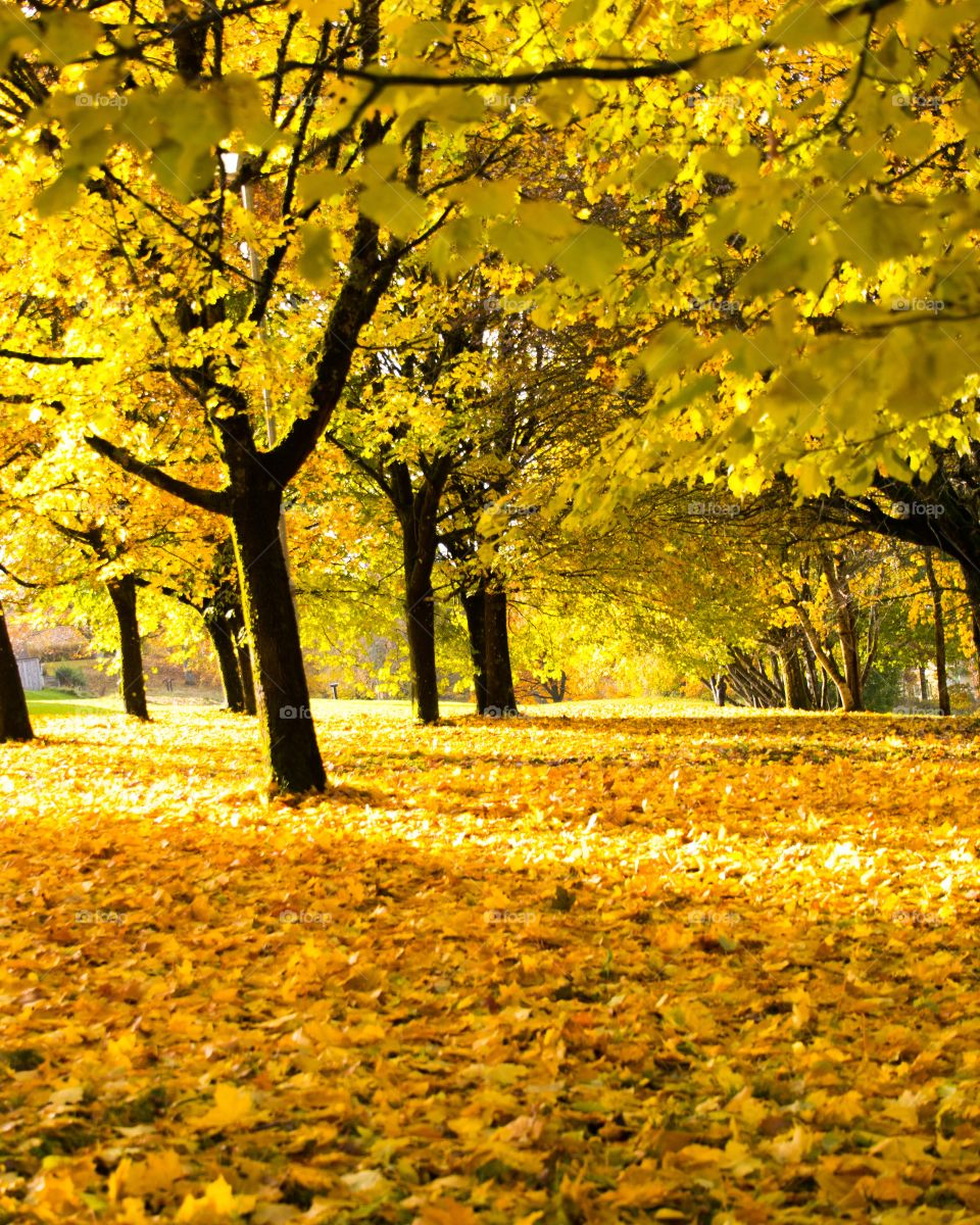 Scenic view of trees in autumn