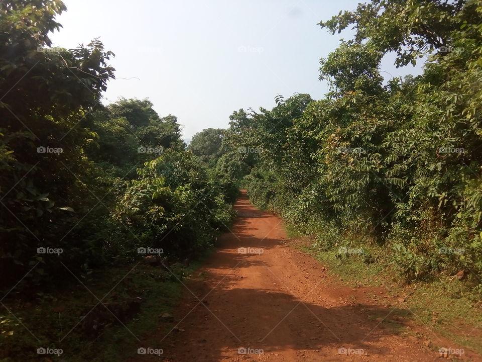 landscape 2017-10-21  002  devkund simlipal  #আমার_চোখে #আমার_গ্রাম #nature #landscape