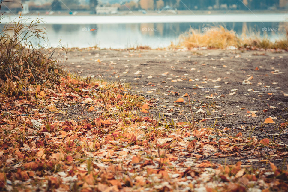 View of fallen leaves in autumn