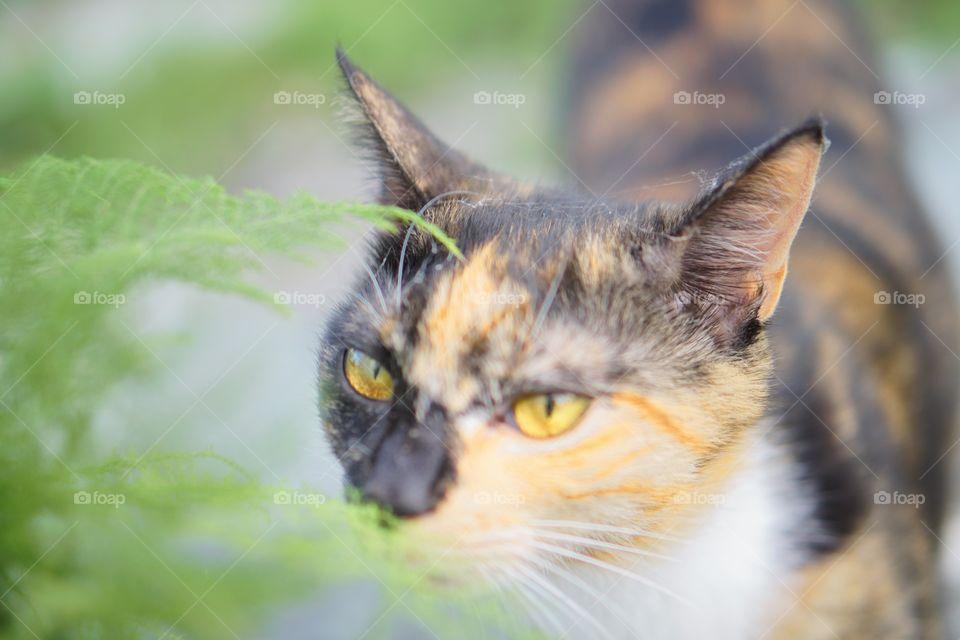 Eye, Cute, Cat, Fur, Nature