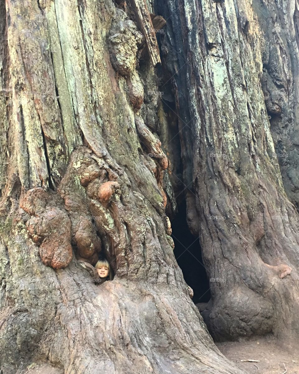 Girl looking through tree trunk