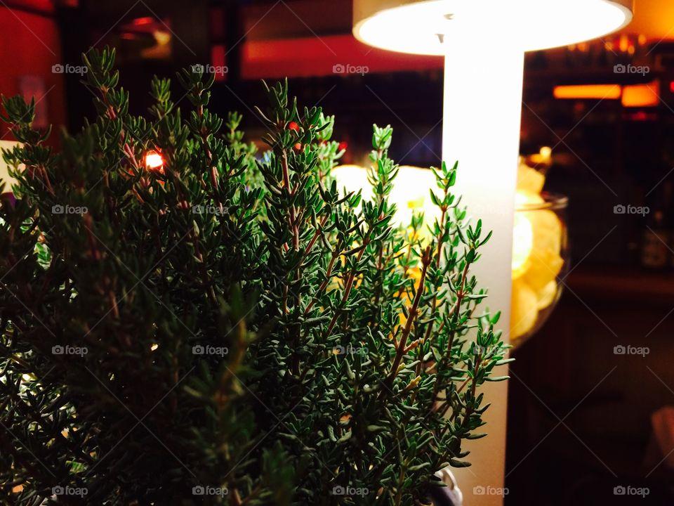 Christmas, No Person, Tree, Decoration, Celebration