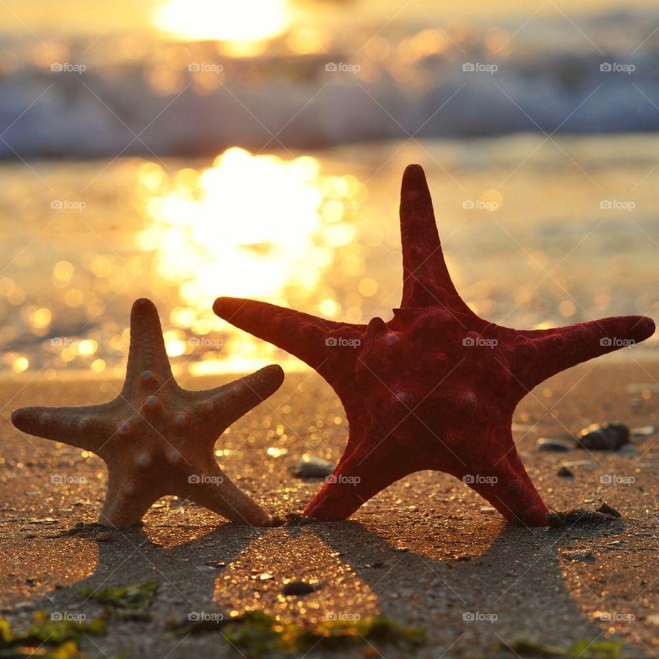 Starfish at beach